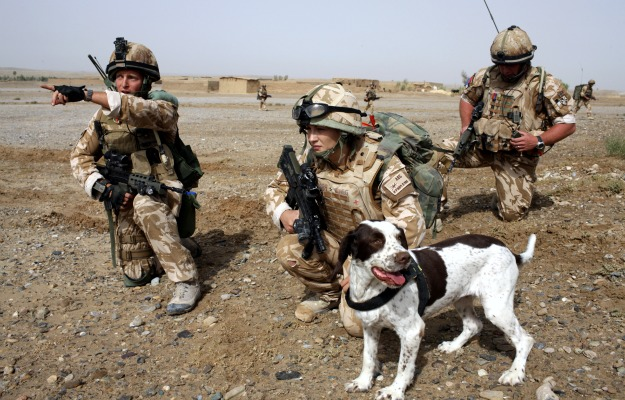Dogs in the Frontline