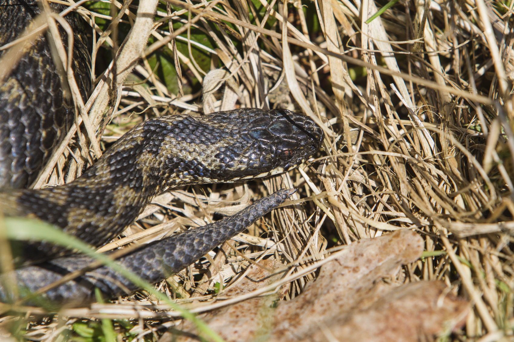 WARNING! Snake Bites on the Rise