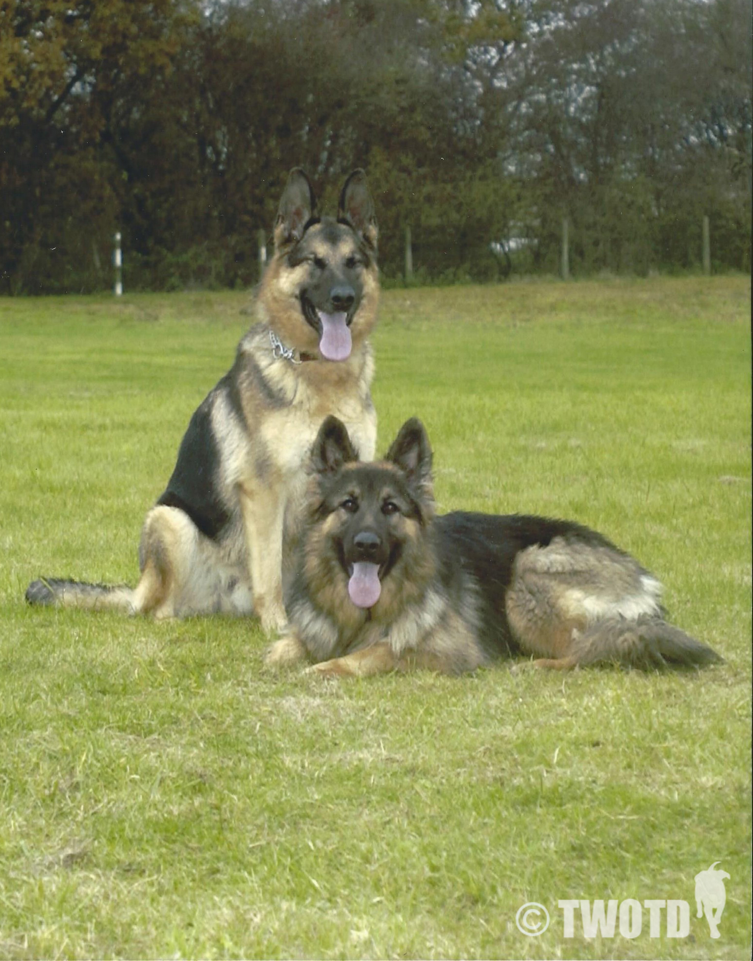 Ministry Defence Police Dog Sasha & Service Police Dog Rebel