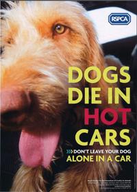 Dogs-Die