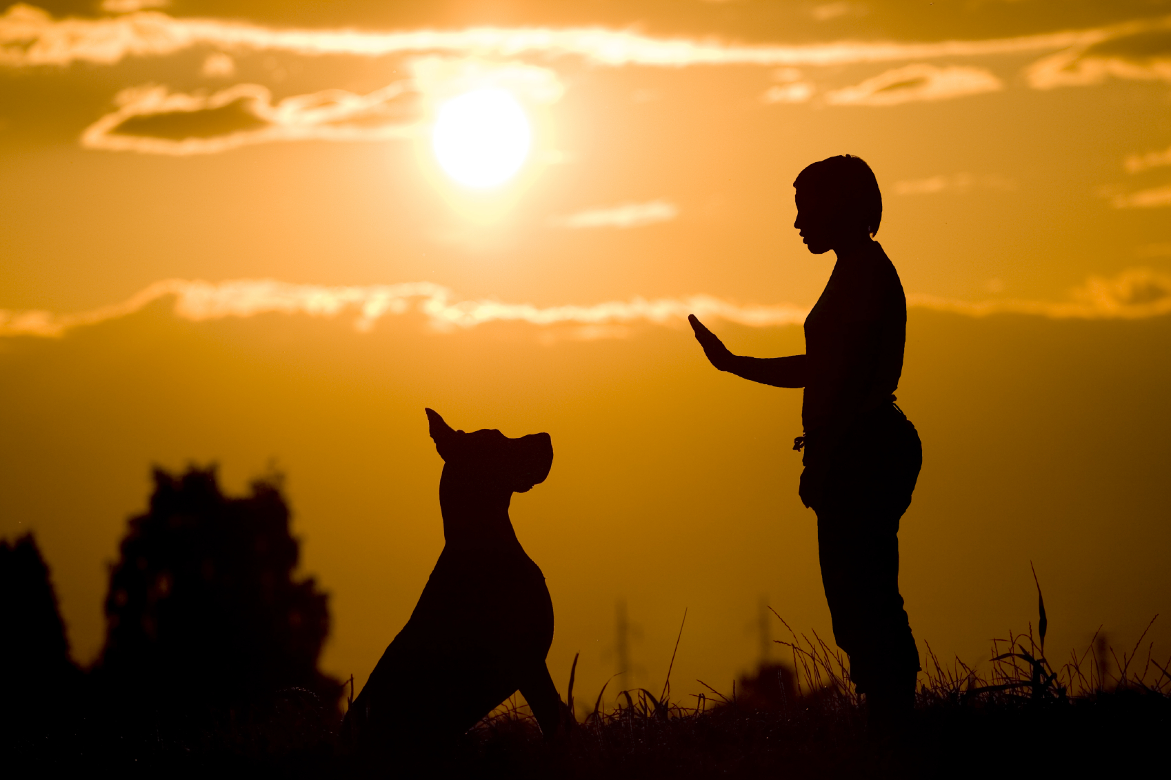 How, when, and where will you train your dog?