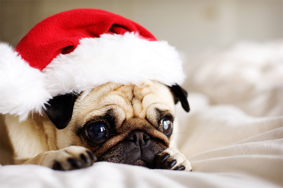 Keep Your Dog Safe This Christmas