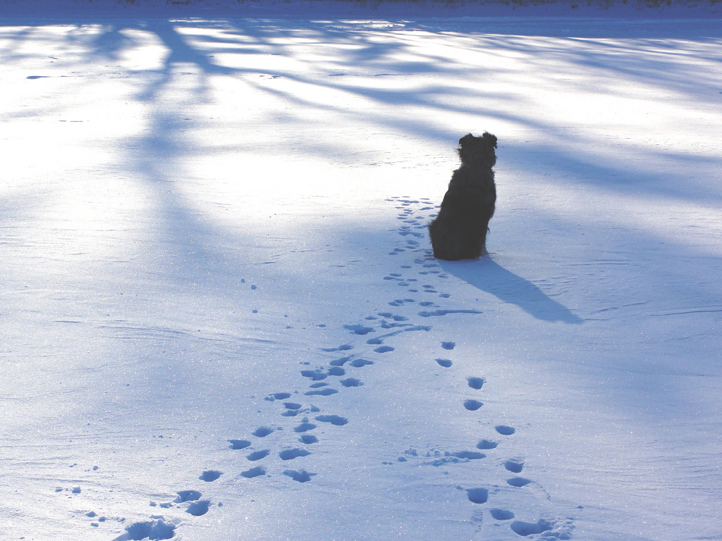 Dog Health Hazards in Winter