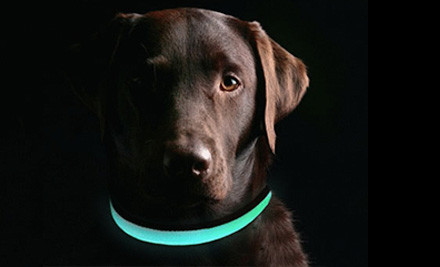 Dog Walking in the Dark – Be Seen, Be Safe, Keep Warm