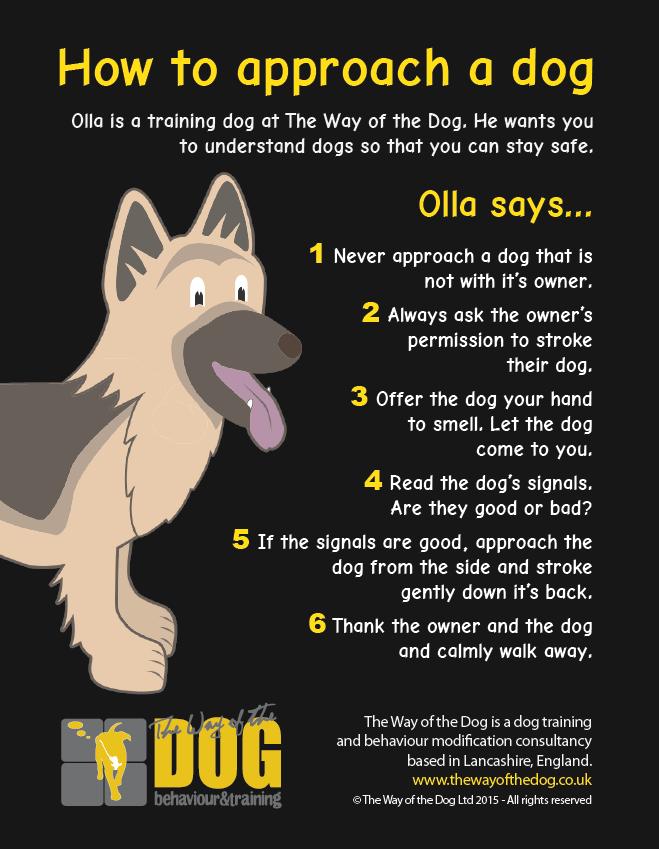 Teach a child to approach a dog