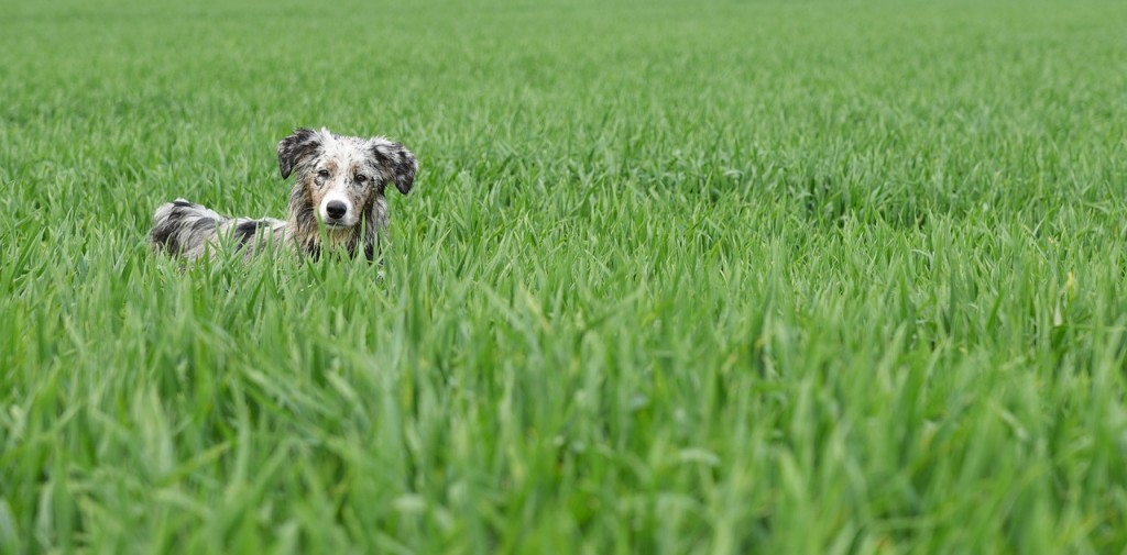 Dog in spring grass