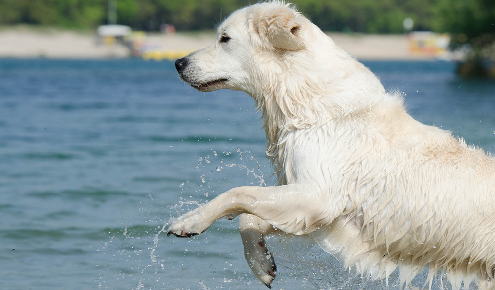 10 Ideas for Keeping Your Dog Cool in Summer