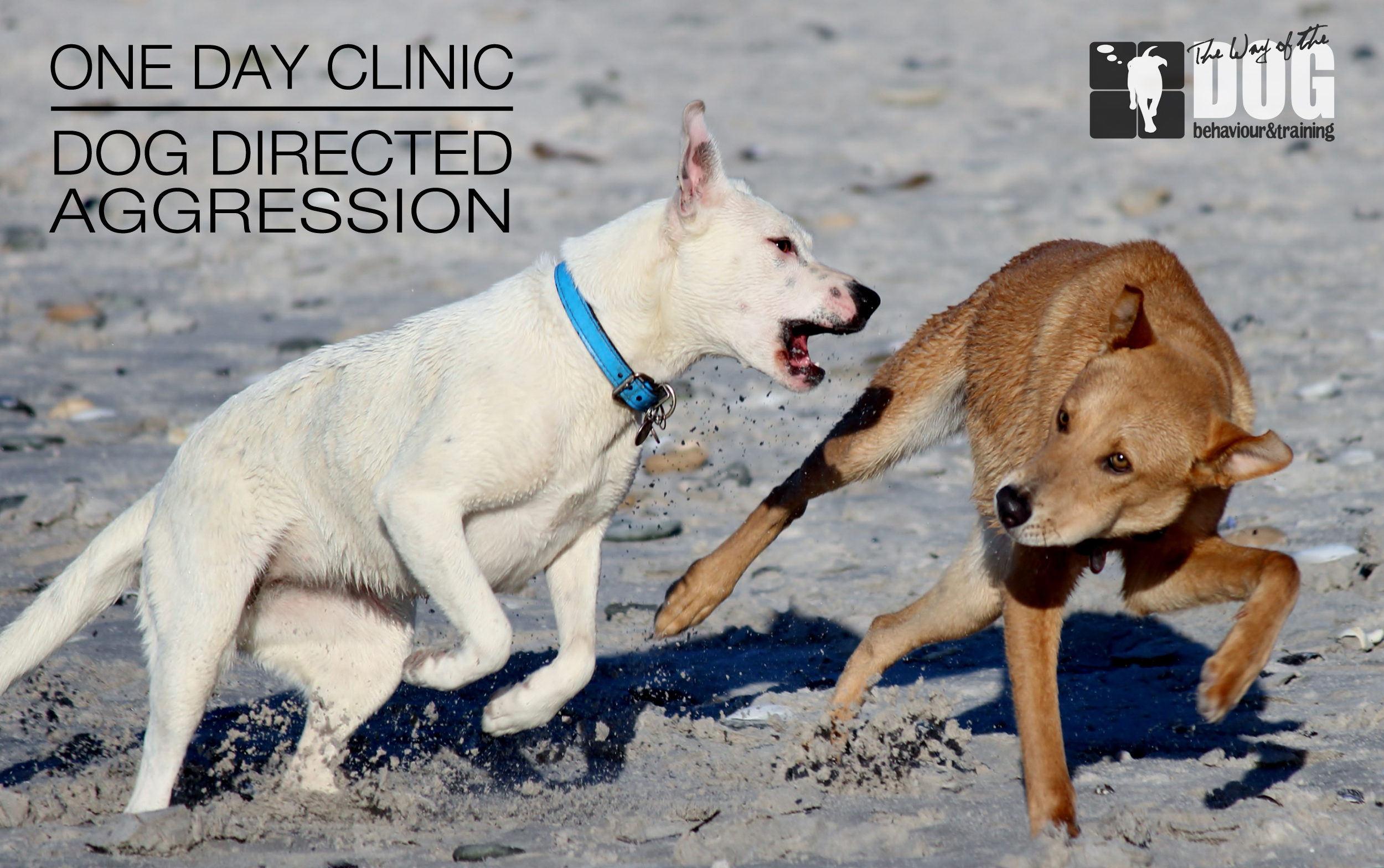Dog Aggression Clinic