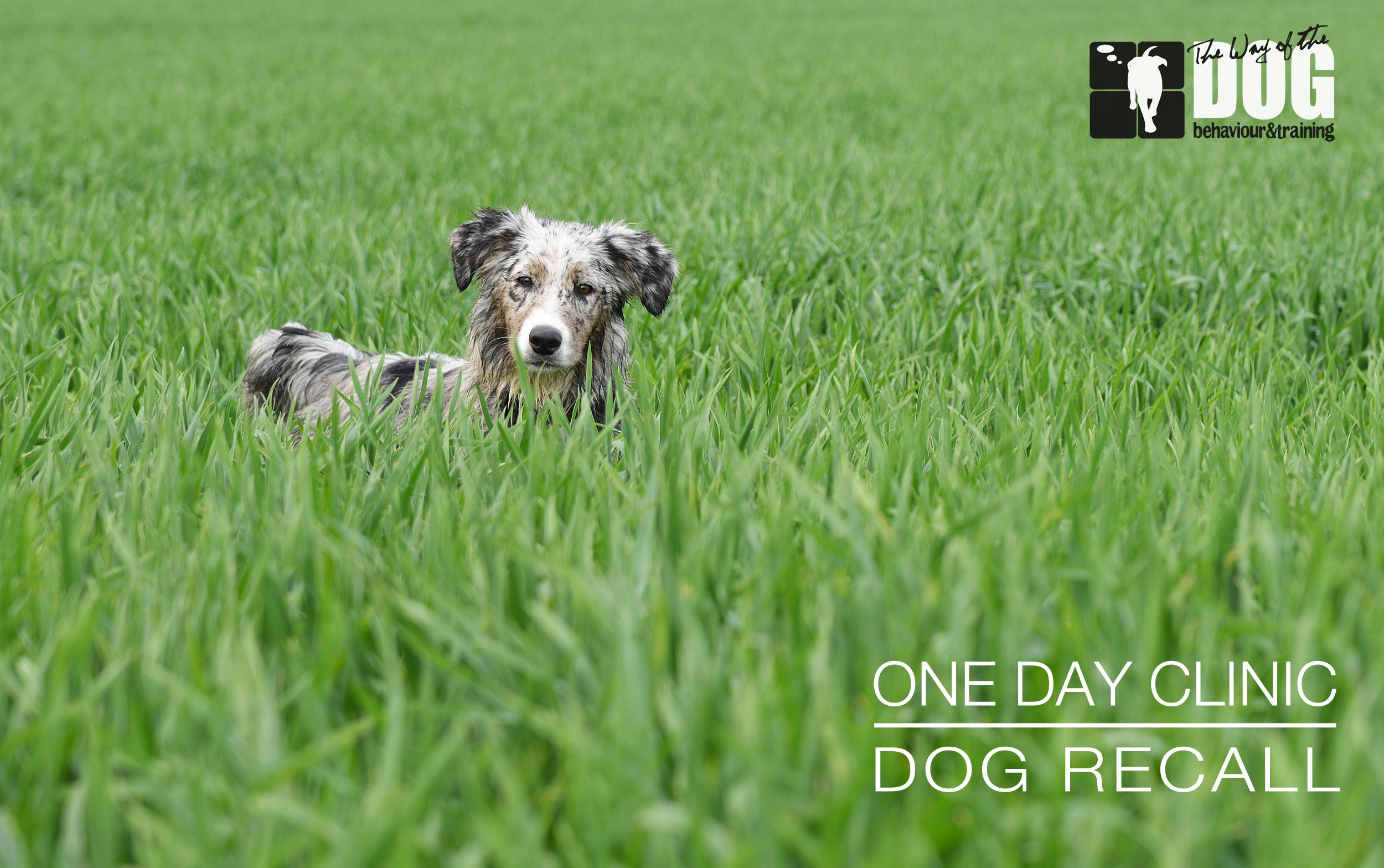 Dog Recall Clinic